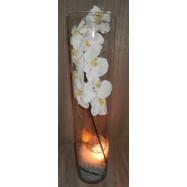 Vase cylindre avec une orchidée , des fibres coco et un led gris