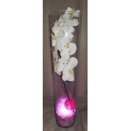 Vase cylindre avec une orchidée , des fibres coco et un led rose