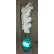Vase cylindre avec une orchidée , des fibres coco et un led turquoise